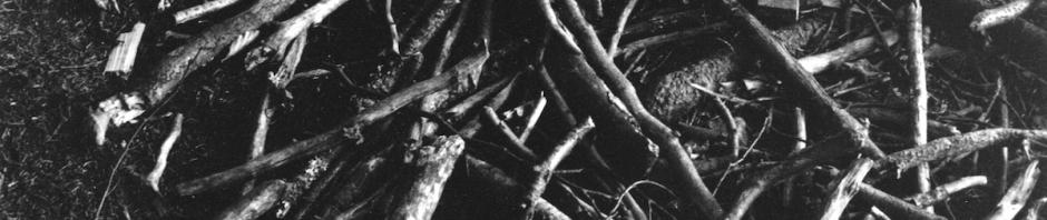 Dry Wood_枯れ木