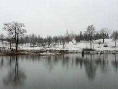 朝から雪。公園は白い世界です。