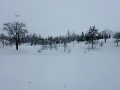 今朝は吹雪いていましたが、午後には止みました。