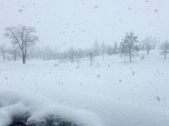 朝になって雪、ときどき吹雪いています。