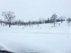 今朝は小雪がちらついています。