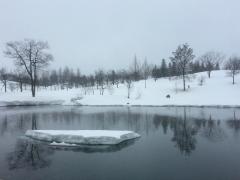 池に浮かんでいる雪も残りわずかです。