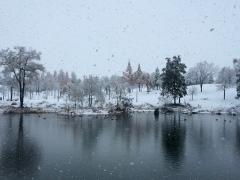 朝から雪、雪、雪です。