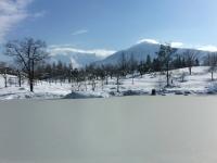 池に雪が積もり、カモはどこへ?