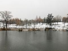 八色の森公園に今朝、初雪襲来です。