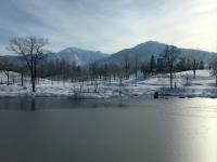 今朝は氷点下。氷が張ったので、カモの姿が見えません。