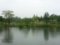 雨に濡れる公園。