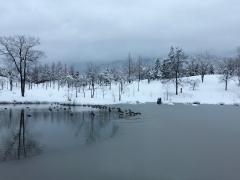 池のカモたちへも謹賀新年!