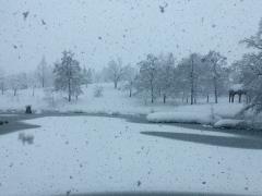 朝から雪が降り出しました(写真5枚)。