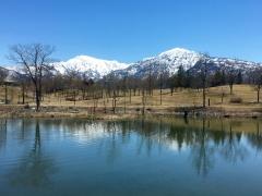この春いちばんの散歩日和でした。