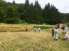 八海山麓稲刈り体験交流会