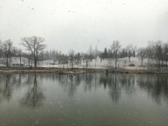 寒気の襲来で吹雪いています。