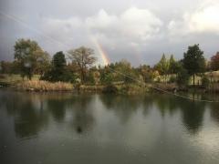 肌寒い一日。夕方、公園に虹が!