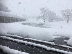 今日も雪、雪、雪が降り続いています。