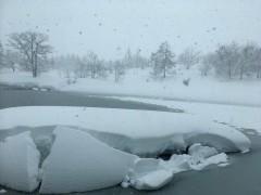 朝からずっと雪です。