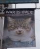 「あなたたちだけじゃないよ。わたしたちも宿んでいます。(猫)」ポリエステルにインクジェットプリント/10x60cm(14点組)2016